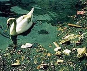 Contaminación acuática