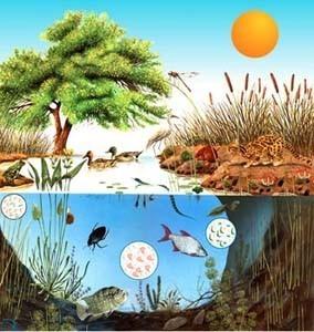 Las plantas los animales y su medio los seres vivos y su for Medio en el que habitan los arboles