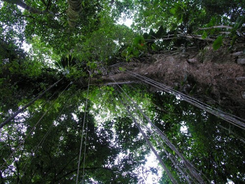 Imágenes de bosques tropicales