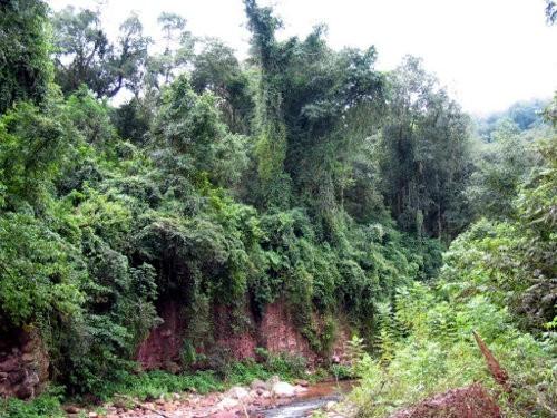 Imágenes de bosques tropicales2