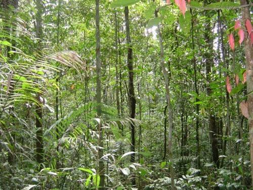 Imágenes de bosques tropicales3