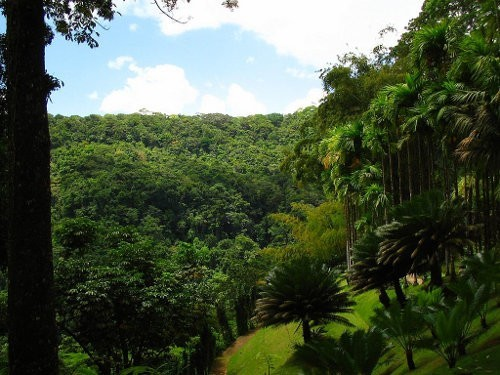 Imágenes de bosques tropicales4