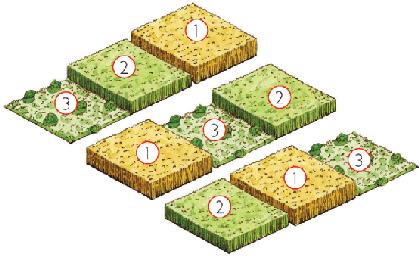 Rotaci n de cultivos for Que es la asociacion de cultivos