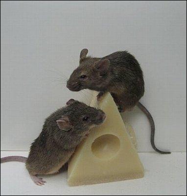 los ratones o mus