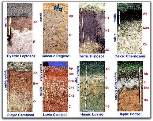 Laminas de los tipos de suelos imagui - Tipos de suelos ...