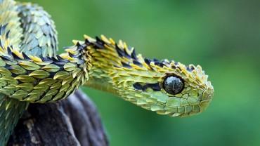 Top 10 de animales extraños - Parte 3