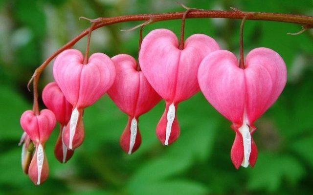 Pinterest the world s catalog of ideas - Flores mas bonitas ...