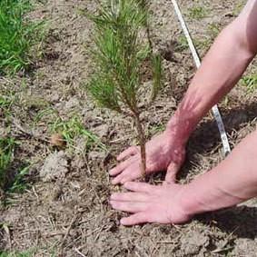 Plantar un árbol