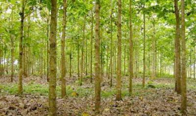 La reforestación apenas afectará el cambio climático