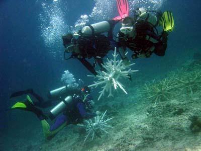 Rehabilitación de arrecifes de coral en Indonesia