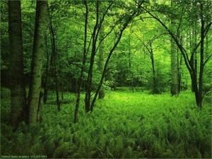 bosque abierto