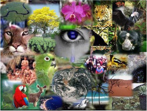 Diversidad biológica (Biodiversidad)