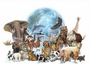 Especies en Peligro Crítico