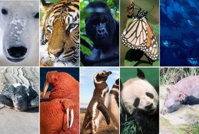 Especies en situación vulnerable
