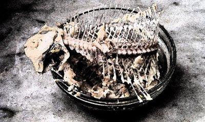 Huesos de peces VS plomo contaminante