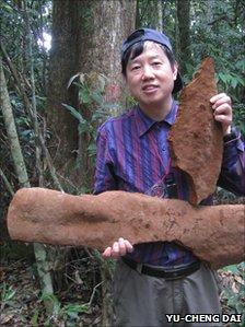 Admira el hongo más grande del mundo