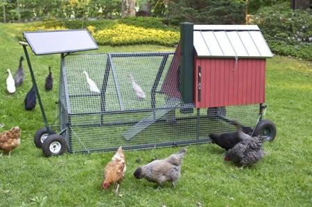 Un gallinero ecológico