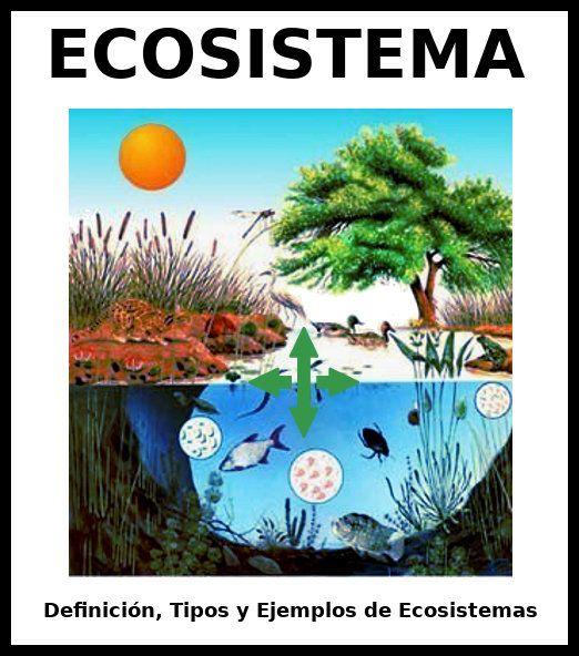 Ecosistemas Qué Son Tipos Clasificación Y Ejemplos