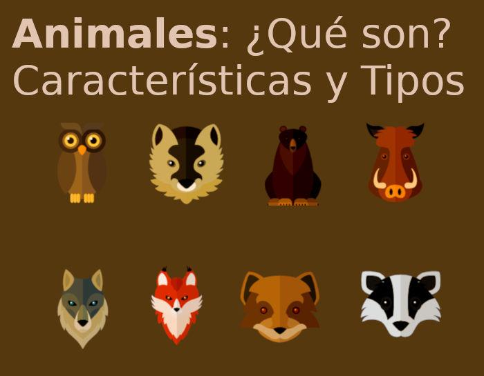 Animales Qué Son Tipos Y Características De Los Animales