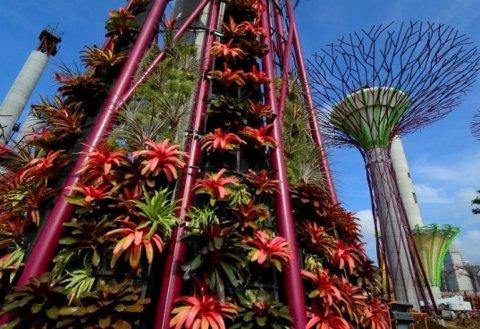 Árboles solares gigantes serán inaugurados a fin de mes en Singapur