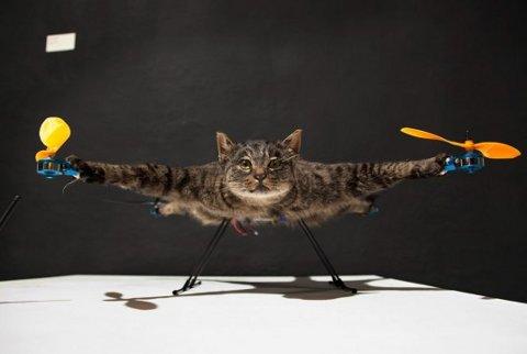 Artista transforma su difunto gato en un helicóptero
