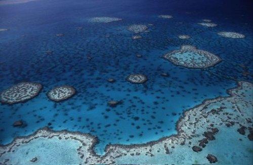 Australia crea la reserva marina más grande del mundo