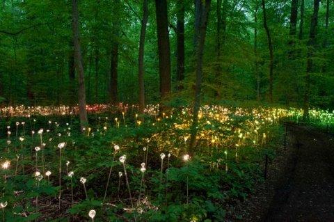 El jardín de flores LED de Bruce Munro