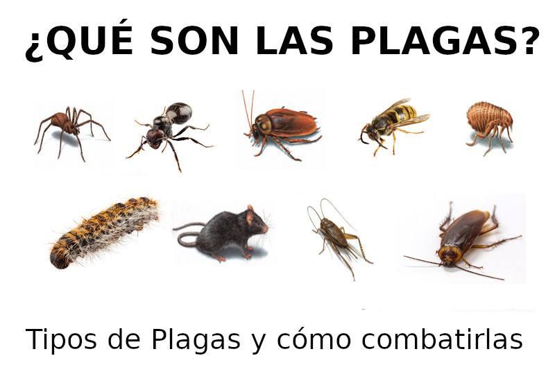 ¿Qué son las plagas?