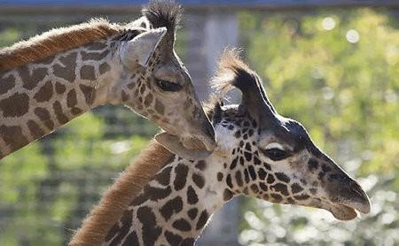 Zoo de San Diego ahora ofrece estaciones de carga para vehículos eléctricos