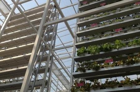 Sky Greens Farms desarrolla granjas verticales de verduras en Singapur