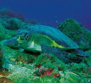 Gorgona: el paraíso de las tortugas