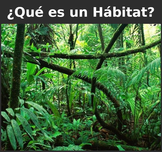 Qué es un habitat