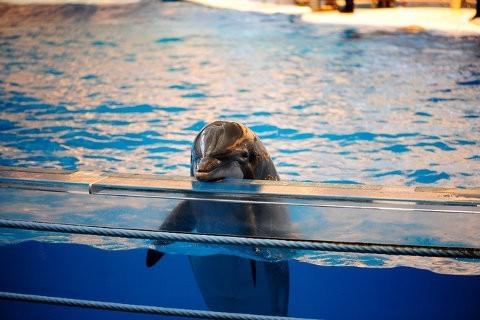 India prohíbe los espectáculos con delfines