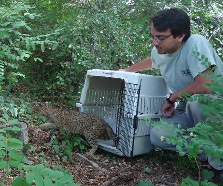 Conservación de la vida silvestre