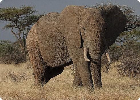 El gobierno de Tanzania contra los cazadores furtivos