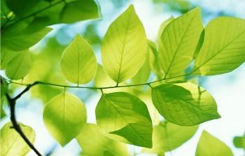 Las hojas de los árboles son unos auténticos filtros de purificación