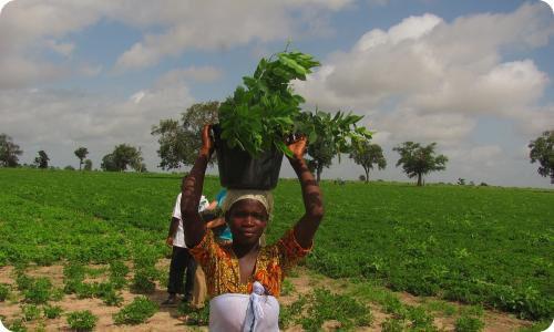 Proyecto de plantación de árboles en África