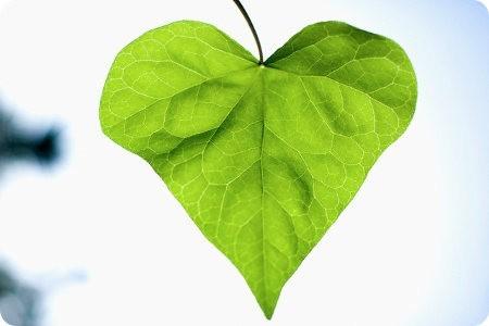 5 Regalos ecológicos para San Valentín