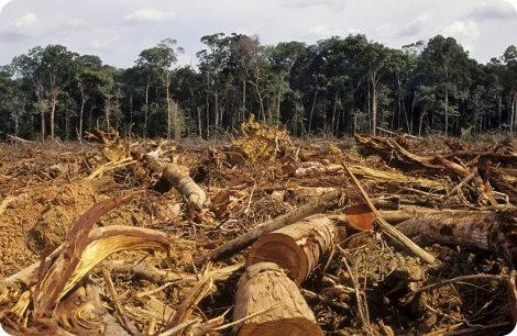 El narcotráfico y la deforestación