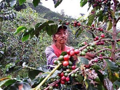 Café: ¿malo para el medio ambiente?