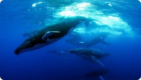 Corte Internacional de Justicia pide a Japón que deje la caza de ballenas