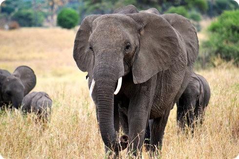Howard G. Buffett se opone a la caza furtiva en Tanzania