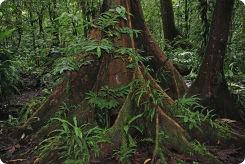 El último bosque Ka del mundo