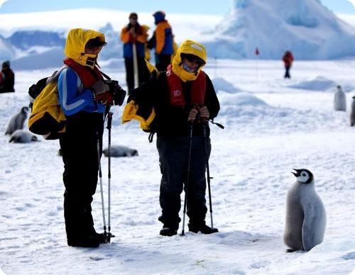 La Antártida pierde 160 gigatoneladas de hielo al año