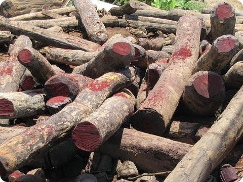África se une contra la tala ilegal