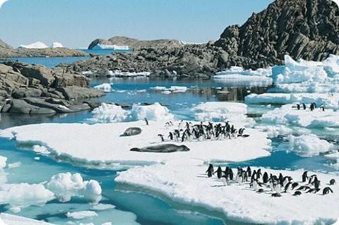 Actividades humanas amenazan la Antártida