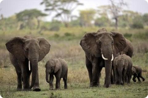 Alarma por la caza de elefantes en Mozambique