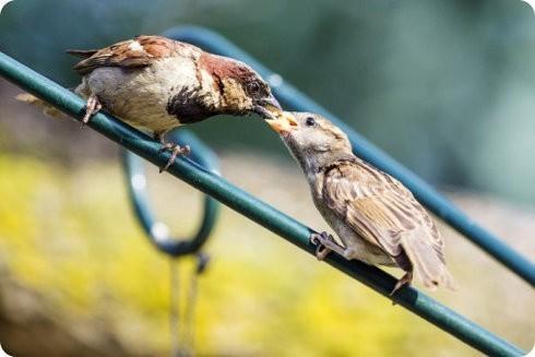 Consejos para ayudar a las aves en verano: parte 1
