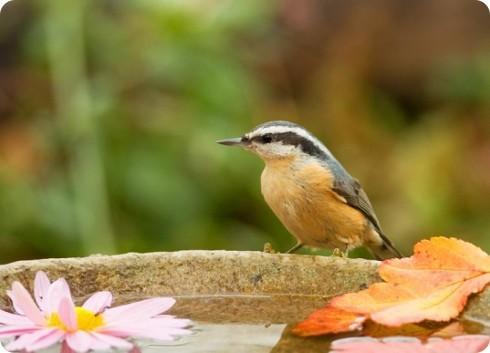Consejos para ayudar a las aves en verano: parte 2