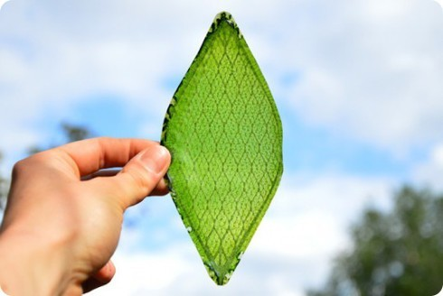 Nueva hoja artificial ayudará a generar oxígeno en el espacio